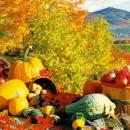 Москва может ввести запрет на всю растениеводческую продукцию из Турции