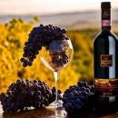 Иностранному виноматериалу усложнят выход на российский рынок